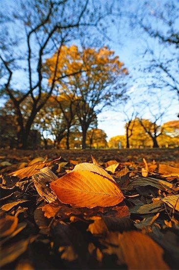 Autumn in Yoyogi Park, Tokyo, Japan Stock Photo - Premium Royalty-Free, Image code: 622-08065089