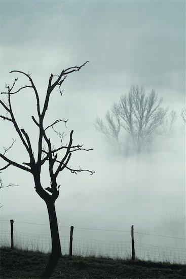 Misty landscape Stock Photo - Premium Royalty-Free, Image code: 633-01573357