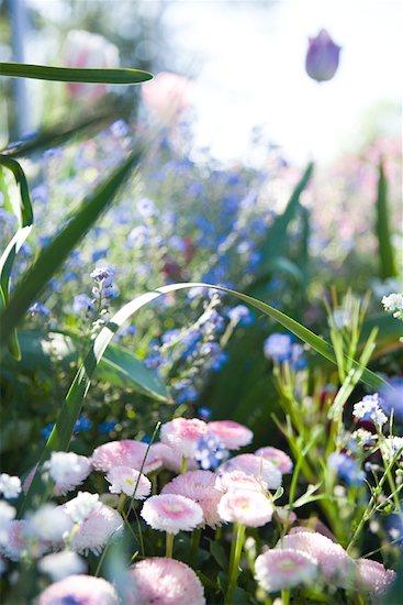 Flower garden Stock Photo - Premium Royalty-Free, Image code: 633-01715144