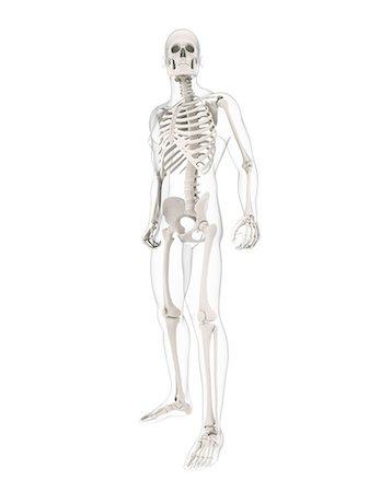 Skeleton Full Body Stock Photos Page 1 Masterfile