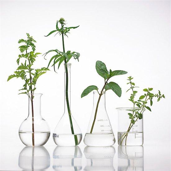 Medicinal plants, conceptual image. Stock Photo - Premium Royalty-Free, Image code: 679-07604372