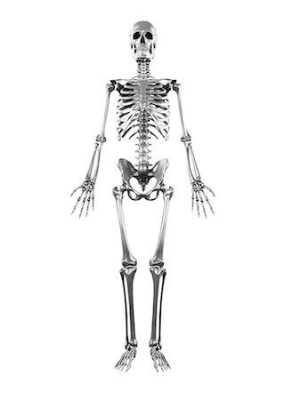 Skeleton full body Stock Photos - Page 1 : Masterfile