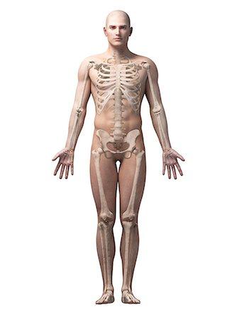 Skeleton full body 3d Stock Photos - Page 1 : Masterfile