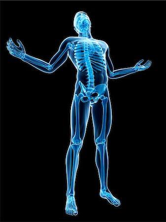 Full body 3d bones skeleton Stock Photos - Page 1 : Masterfile