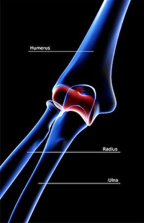 Elbow Xray Anatomy Stock Photos Page 1 Masterfile