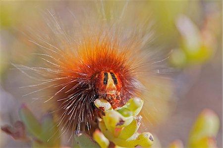 Raupe (insekt) Stock Photos - Seite 1 : Masterfile