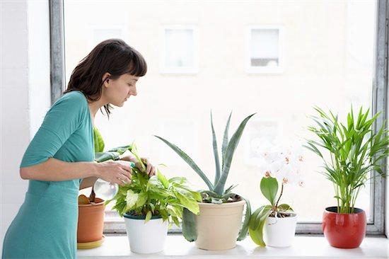 Businesswoman spraying pot plants by window Stock Photo - Premium Royalty-Free, Image code: 693-03301759