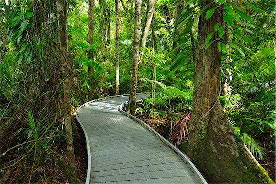 Boardwalk in Daintree Rainforest, Cape Tribulation, Daintree National Park, Queensland, Australia Stock Photo - Premium Rights-Managed, Artist: Raimund Linke, Image code: 700-08146053