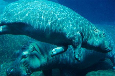 San Diego Zoo Aquarium Stock Photos Page 1 Masterfile