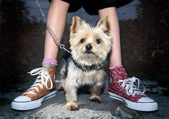 Portrait of Dog on Leash Stock Photo - Premium Rights-Managed, Artist: Andrew Kolb, Image code: 700-00616718