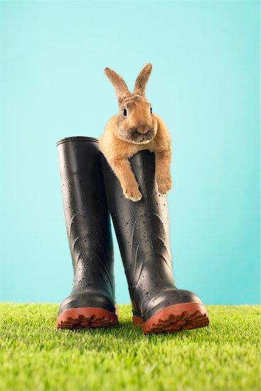 Rabbit in Rain Boots Stock Photo - Premium Rights-Managed, Artist: Jerzyworks, Image code: 700-00618739