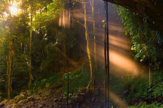 Crystal Shower Falls, Dorrigo National Park, New South Wales, Australia Stock Photo - Premium Rights-Managed, Artist: Jochen Schlenker, Image code: 700-01014794