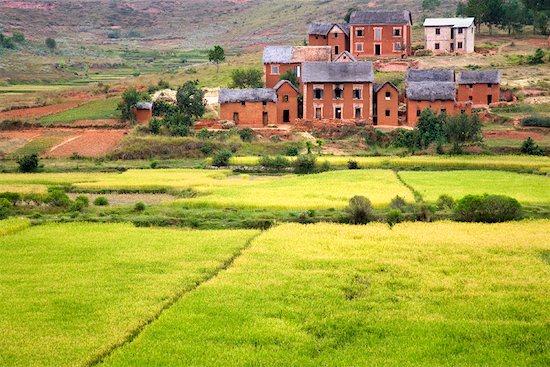 Rice Fields Near Behenjy, Madagascar Stock Photo - Premium Rights-Managed, Artist: R. Ian Lloyd, Image code: 700-01112604