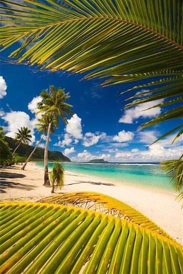 Palm Leaves at Faofao Beach, Upolu, Samoa Stock Photo - Premium Rights-Managed, Artist: R. Ian Lloyd, Image code: 700-01519472