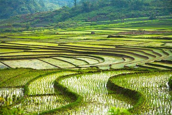 Rice Terraces, Sumatra, Indonesia Stock Photo - Premium Rights-Managed, Artist: R. Ian Lloyd, Image code: 700-02046562
