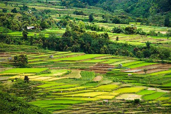 Overview of Rice Terraces, Alahan Panjang, Sumatra, Indonesia Stock Photo - Premium Rights-Managed, Artist: R. Ian Lloyd, Image code: 700-02046604