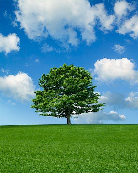 Lone Maple Tree in Field Stock Photo - Premium Rights-Managed, Artist: Ken Davies, Image code: 700-02232027