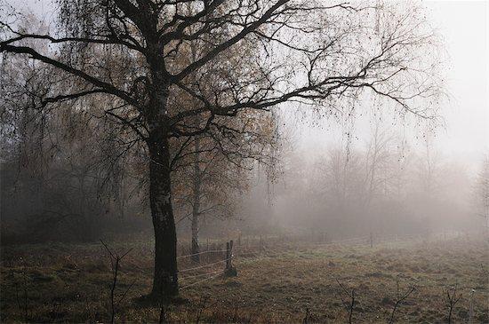 Tree by Field, Schwenninger Moos, Villingen-Schwenningen, Baden-Wurttemberg, Germany Stock Photo - Premium Rights-Managed, Artist: Jochen Schlenker, Image code: 700-02633441