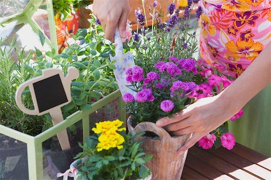 Woman Gardening Stock Photo - Premium Rights-Managed, Artist: Klick, Image code: 700-03229391