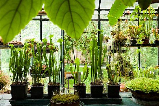Greenhouse, Botanical Gardens, Padua, Veneto, Italy Stock Photo - Premium Rights-Managed, Artist: R. Ian Lloyd, Image code: 700-03644472