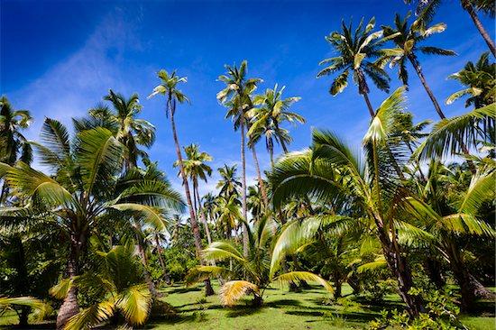 Fafa Island Resort, Nuku'alofa, Tongatapu, Kingdom of Tonga Stock Photo - Premium Rights-Managed, Artist: R. Ian Lloyd, Image code: 700-03814151