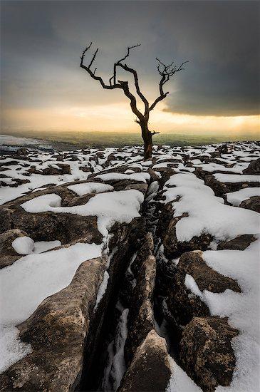Tree in the snow, Twistleton Scar End, Ingleton, Yorkshire, England, United Kingdom, Europe Stock Photo - Premium Rights-Managed, Artist: robertharding, Image code: 841-08421327