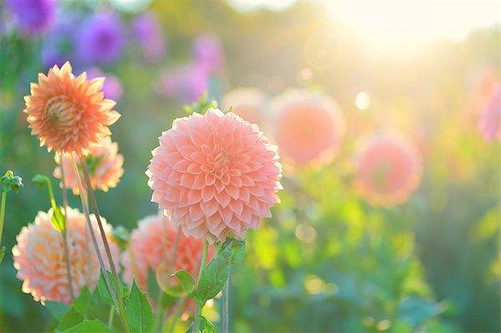 Hokkaido, Japan Stock Photo - Premium Rights-Managed, Artist: Aflo Relax, Image code: 859-09104867