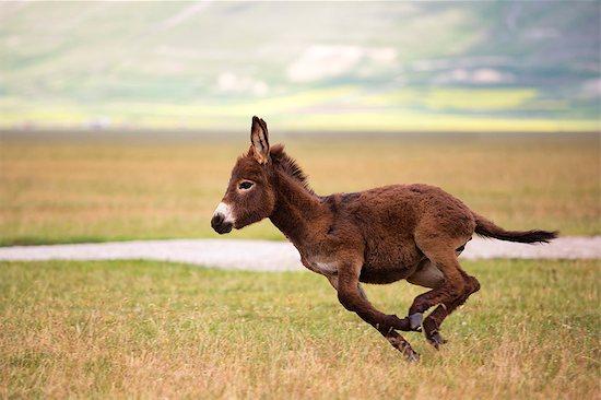 Europe,Italy,Umbria,Perugia district, Castelluccio di Norcia Sibillini Ranch Stock Photo - Premium Rights-Managed, Artist: ClickAlps, Image code: 879-09020696